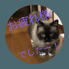 猫 ボンタ