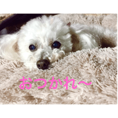 [LINEスタンプ] 愛しの るぅちぇ(犬)