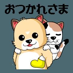 ぷちゃこ&ぷっちゃま花火大会へ行く