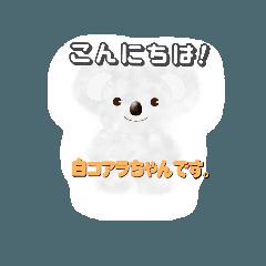 白コアラちゃん