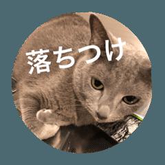 ねこスタンプ(銀之介)3