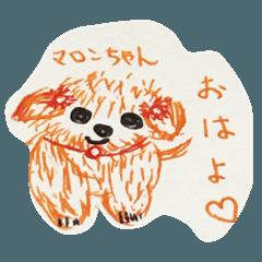 マロンちゃんのイラスト