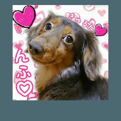 保護犬卒業生チビちゃんのましかくスタンプ
