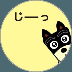 動く!!柴犬さっちゃん12
