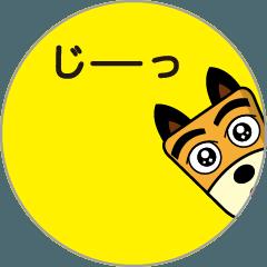 動く!!柴犬さっちゃん11