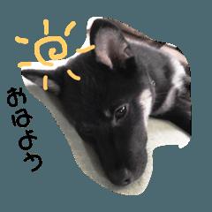 [LINEスタンプ] ウチの昇吉part2