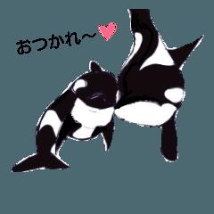 [LINEスタンプ] 海洋動物(日常会話編)
