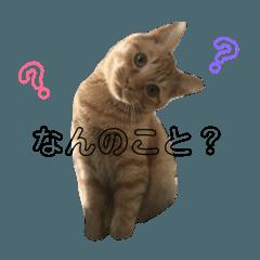 [LINEスタンプ] 我が家の猫1