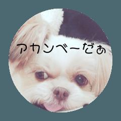 [LINEスタンプ] 犬のモカさんの1日