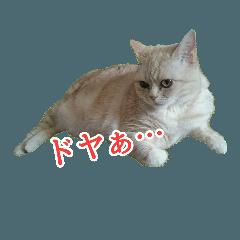 [LINEスタンプ] まめちゃん(猫)