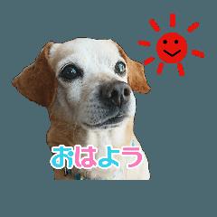 [LINEスタンプ] 犬のスタンプ リッキー