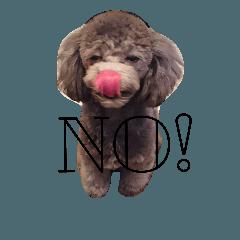 犬のFil2