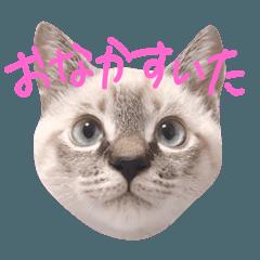 [LINEスタンプ] 猫のこたろうくん