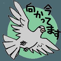 [LINEスタンプ] 社畜なハトの日常スタンプ