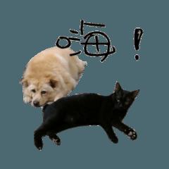 [LINEスタンプ] 黒い猫と黄色い犬
