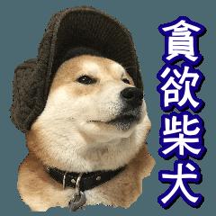 [LINEスタンプ] 食べ物のある柴犬/多言語