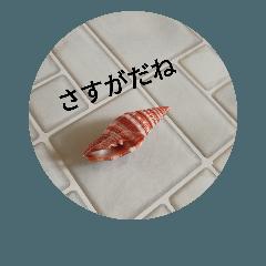 [LINEスタンプ] 貝殻のつぶやき