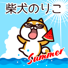 柴犬のりこの夏