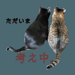 [LINEスタンプ] トムジュリ仲良しスタンプ2