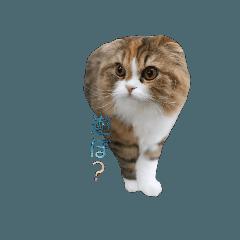 [LINEスタンプ] 猫の小豆のスタンプ