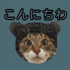 [LINEスタンプ] 表情豊かな猫たちの日常4