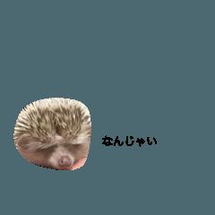 [LINEスタンプ] ハリネズミ もぐらん その2