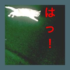 [LINEスタンプ] ちぃちゃん2