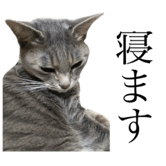 [LINEスタンプ] ごん(猫)スタ