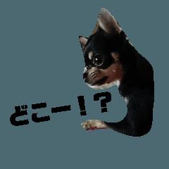 [LINEスタンプ] 樹里江戸の一日5