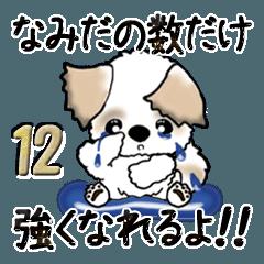 [LINEスタンプ] シーズー(励ましの言葉) Vol.12