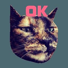 [LINEスタンプ] 猫5匹