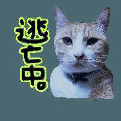 [LINEスタンプ] 落書き、たまに猫